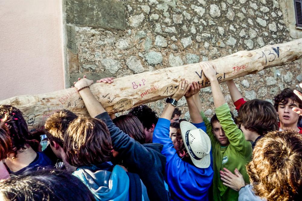 Pi de Sant Antoni 1
